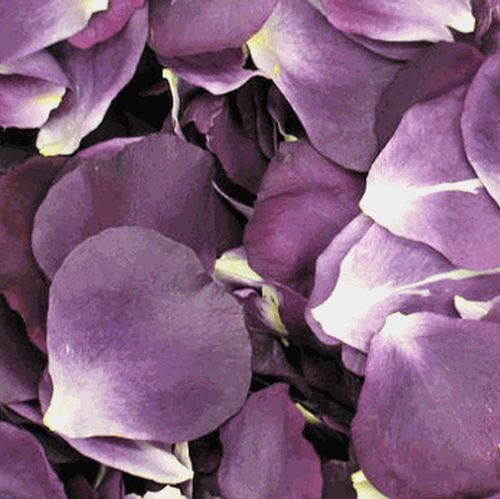 Passionate Purple Rose Petals (30 Cups)