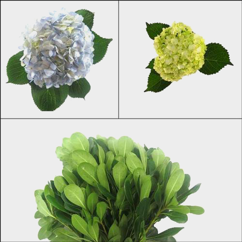 Mini Hydrangea DIY Flower Pack