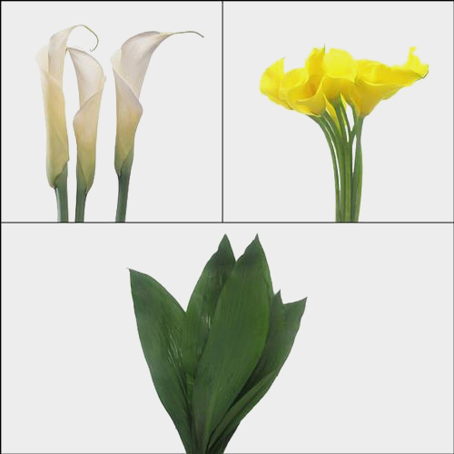 Calla Lily DIY Flower Pack