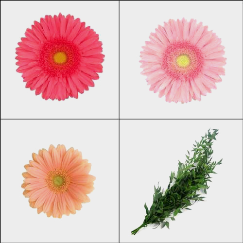 Gerbera Daisy DIY Flower Pack