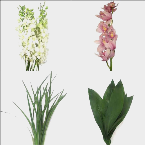 Orchid DIY Flower Pack
