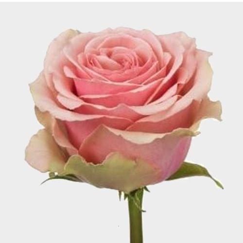 Pink flowers light hot pink wedding flowers rose geraldine 50 cm mightylinksfo