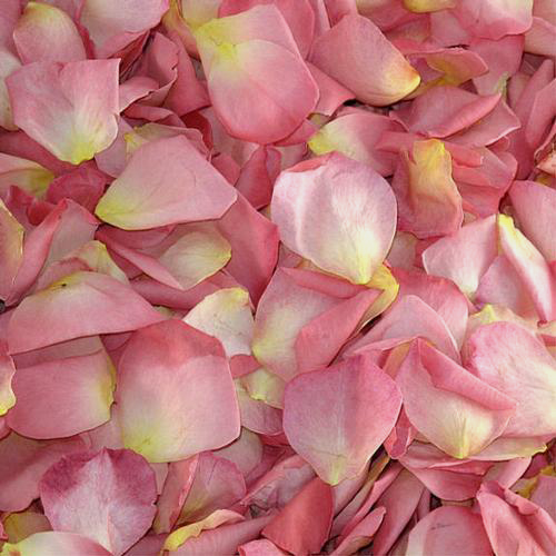 Enchanting Fd Rose Petals (30 Cups)
