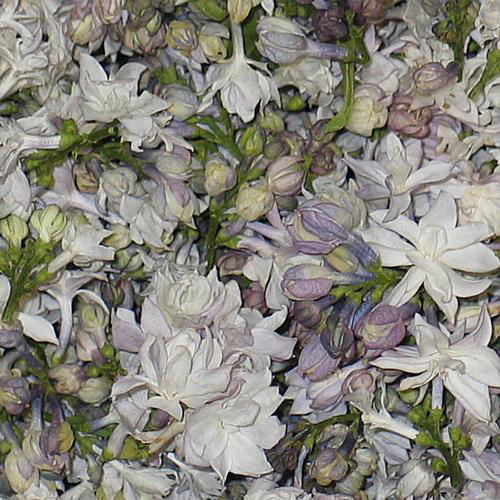 Wholesale flower petals petals for diy weddings white blend fd lilac petals 30 cups mightylinksfo