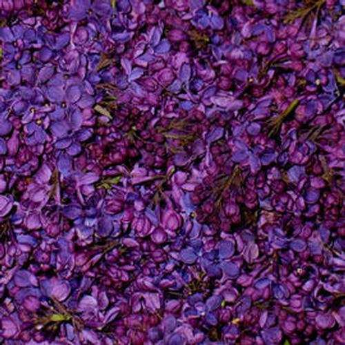 Wholesale flower petals petals for diy weddings deep purple fd lilac petals 30 cups mightylinksfo
