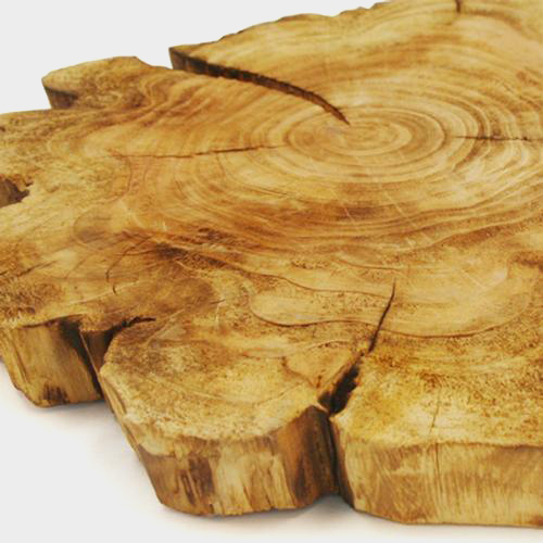 Natural Wood Tree Trunk Decor