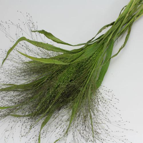 Assorted Fancy Grasses (6 Bunches)