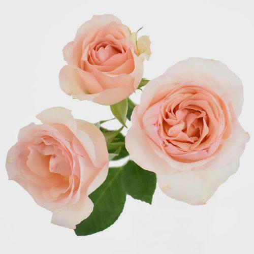 Peach flowers wholesale wedding flowers bloomsbythebox spray garden rose peach mightylinksfo