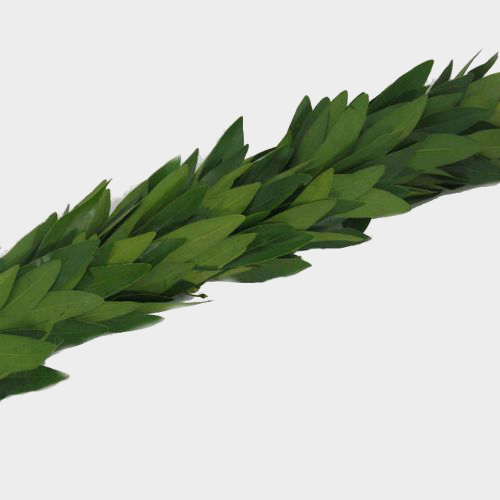 Specialty Greens Square Wreath 20 Inch