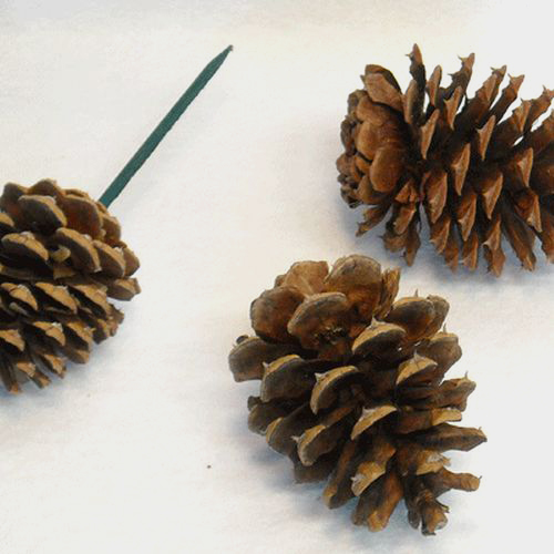 Holiday greens wreaths and garland for Large pine cones
