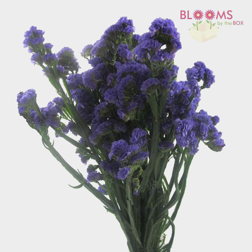 Purple Filler FlowersBulk Pack