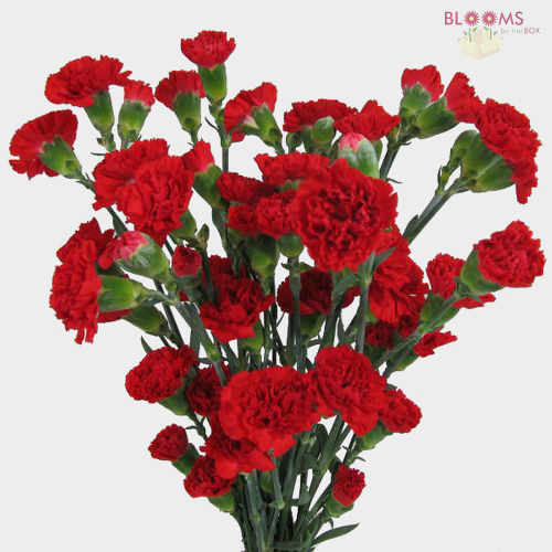 Red Filler Flowers Bulk Pack