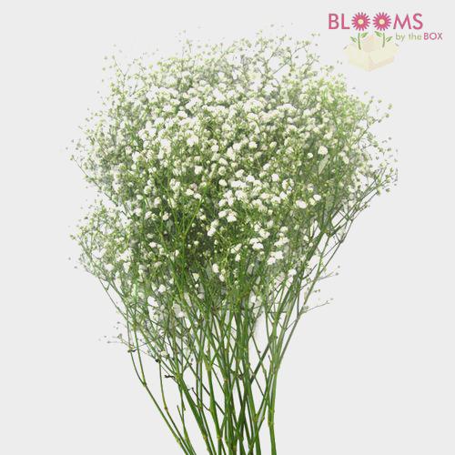White flowers diy white wedding flowers bloomsbythebox classic white fillers bulk pack mightylinksfo