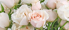 Shop Classic Spray Roses