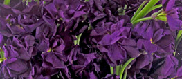 Shop Lavish Purple Stock Flowers